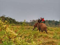 В Непале слоны спасли туристов во время наводнения