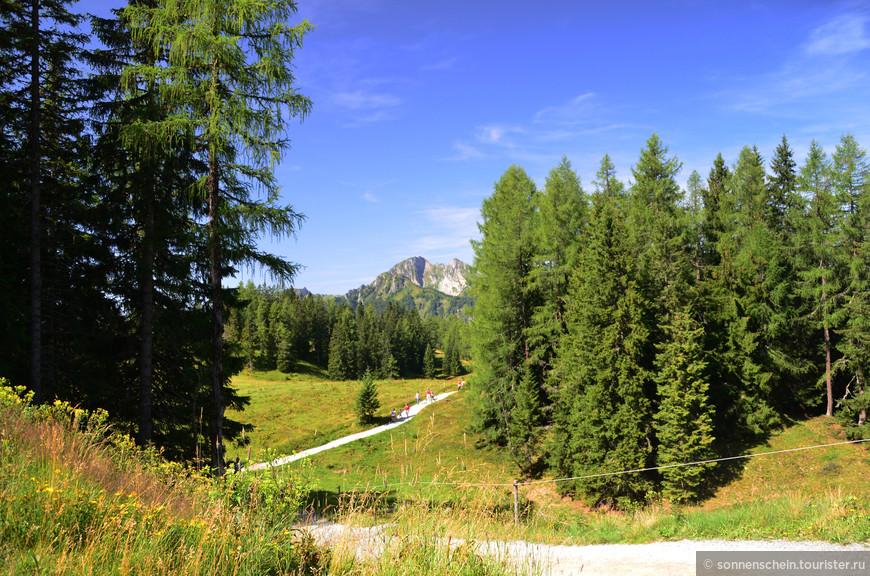 Общая протяженность трасс для беговых лыж в Альпендорфе - 8 км (самая длинная и высокогорная - Obergassalm - 4 км, 1600 - 1700 м).