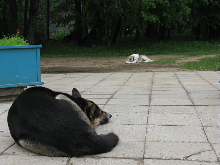 Встретили меня .... вот эти две грустные собаки. Не думаю, что они устали от наплыва туристов, - их здесь немного. Это раньше Сахарово было усадьбой, до которой ехать и ехать. Нынче же это пригород Твери и добраться можно очень даже быстро из центра города, примерно полчаса на автобусе.  Однако для тех, кто ещё не знаком с господином Гурко, самое время его представить. Гурко, Иосиф Владимирович - генерал-фельдмаршал. Родился в 1828 г.; воспитывался в пажеском корпусе; служа в лейб-гвардии гусарском Его Величества полку, сразу заявил себя как выдающийся кавалерийский офицер. Перед началом войны 1877 г. командовал 2-й гвардейской кавалерийской дивизией. Когда наши войска переправились через Дунай у Систова, великий князь главнокомандующий решил двинуть вперед особый отряд, для быстрого захвата некоторых проходов через Балканы. Поручение это было возложено на Гурко, который 24 июня принял под свое начальство передовой отряд, составленный из четырех конных полков, стрелковой бригады и новосформированного болгарского ополчения, при двух батареях конной артиллерии. Гурко выполнил свою задачу быстро и смело, одержал над турками ряд побед, закончившихся взятием Казанлыка и Шипки. В период борьбы за Плевну Гурко, во главе войск гвардии и кавалерии западного отряда, разбил турок под Горным Дубняком и Телишем, затем снова пошел к Балканам, занял Энтрополь и Орханье, а после падения Плевны, усиленный IX корпусом и 3-й гвардейской пехотной дивизией, несмотря на страшную стужу, перевалил через Балканский хребет, взял Филиппополь и занял Адрианополь, открыв путь к Царьграду. По окончании войны был назначен помощником главнокомандующего войсками гвардии и Санкт-Петербургского военного округа, а с 7 апреля 1879 г. по 14 февраля 1880 г. занимал должность санкт-петербургского временного генерал-губернатора. В январе 1882 г. он назначен был временным одесским генерал-губернатором и командующим войсками Одесского военного округа, в июле 1883 г. - варшавским генерал-губернатором и команд