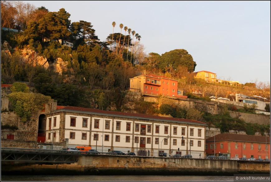 Зелень, пальмы, январь - это тоже Порту.