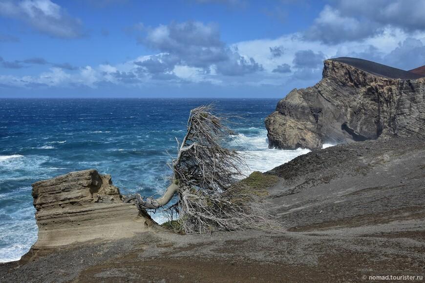 Дерево из последних сил сопротивляется жутким океанским ветрам...