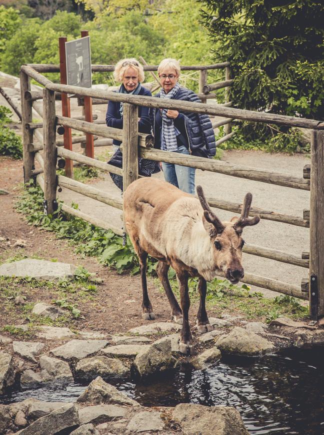 Парк занимателен и для детей и для взрослых. Там постоянно проходят мероприятия. Наличие животных тоже особенно радует.