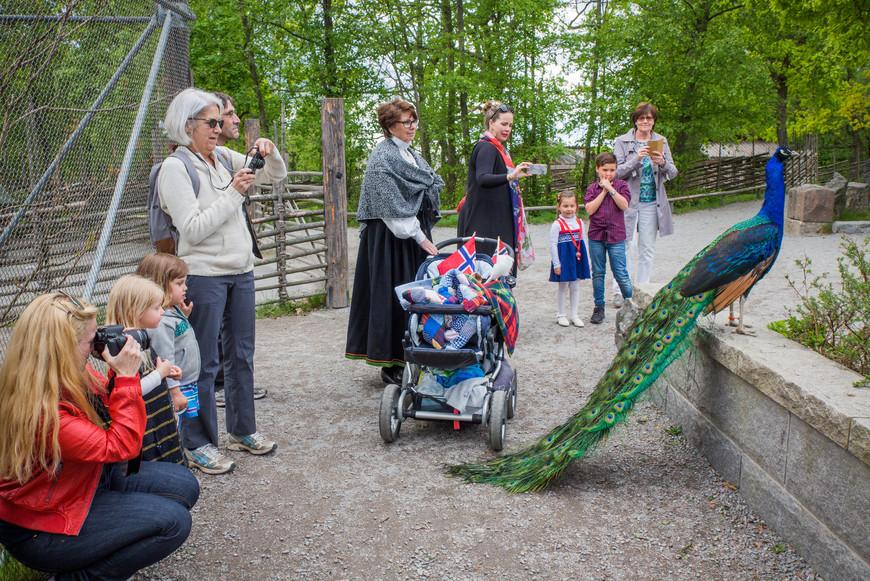 Еще было замечено,что павлины очень не любят детские коляски. При нас эта птица даже пыталась на нее напасть, расценив видимо ее как какое-то жуткое орудие пыток.