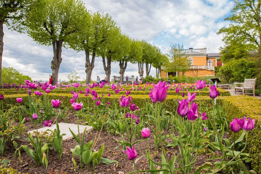 Весна очень неплохое время для посещения Стокгольм. В конце апреля цветет шикарная Сакура(о ней будет в поездке 2017 - это была моя мечта). В мае, свежая зелень и тюльпаны. а погода, ну...что вы хотите от северной страны, но все может быть.
