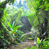 Джунгли по пути к огромному дереву