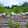 Яйце-каменное плато, усыпанное цветами
