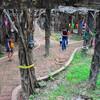 Лес духов из единого дерева с сотней стволов