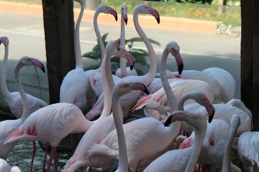 Долго стоял тут и фотографировал.Хотел поймать двух фламинго ,чтобы получилось красиво,но их очень много.