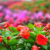 Цветочный парк на вершине Дои Интханон