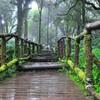Собственно вершина - это поросший мхом лес