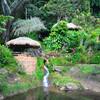 Опиумный сад в поселение хмонов