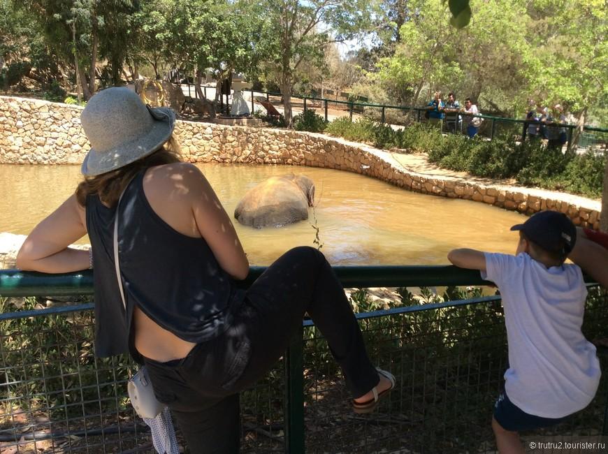 Библейский зоопарк в Иерусалиме. Здесь собраны все животные, которые упомянуты в Библии, ну и слоны тоже.