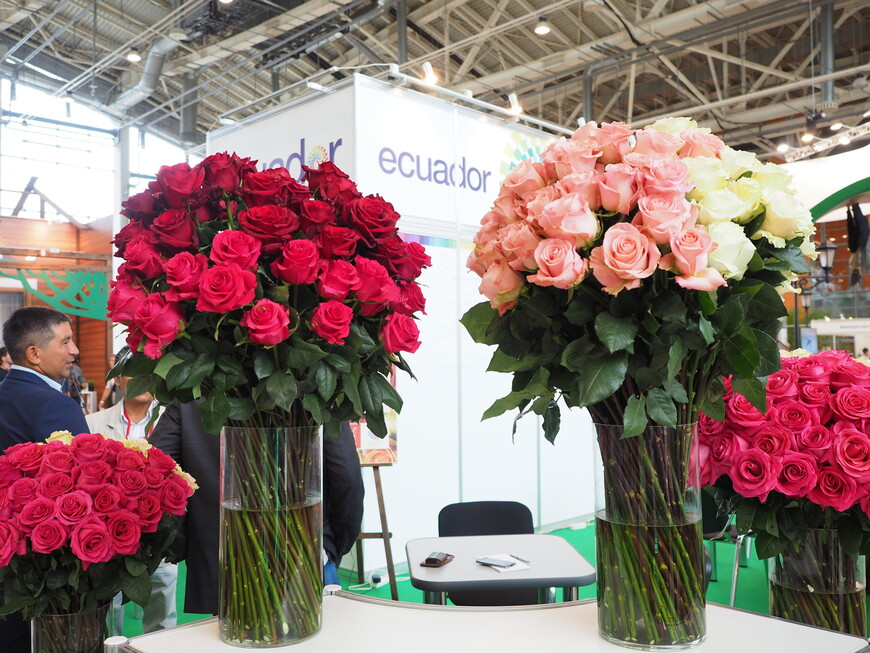 Павильон крупнейшей эквадорской компании по поставкам роз в Россию. Эквадор уверенно занимает первое место по поставкам роз в Россию. На его долю приходится более 60% рынка роз России. Конкурентов эквадорским розам в России нет. Никто не может обеспечить качество цветов, сопоставимое с эквадорскими розами. В Эквадоре розы растут в идеальных условиях на обширных склонах погасших вулканов на высоте 2,5 км над уровнем моря. Подобная почва на основе вулканического пепла считается самой лучшей для цветов. На склонах вулканов много солнца и обеспечена идеальная температура, в течение всего года средняя температура от 20 до 25 градусов. Поэтому у роз из Эквадора крепкий и длинный стебель и плотный бутон и они прекрасно переносят транспортировку и могут после покупки простоять, не увядая, до 2-х недель в воде. Розы в Эквадоре выращивают уже несколько столетий, до сих пор как памятник сохранилась самая старая плантация, первый урожай роз на который был собран еще в 1580 году. Единственный недостаток роз из Эквадора, который отмечают эксперты, они почти не имеют запаха. Это связано с тем, что эквадорские розы транспортируются на длительное расстояние: сначала в Голландию, где проходят цветочные аукционы, а затем самолетом в Россию. При транспортировке для роз создаются такие условия, чтобы они спали: используется специальная газовая атмосфера и пониженная температура до +4 град.С. И еще надо отметить, что более 50% цены на розу из Эквадора связано с транспортными расходами на её доставку в Россию.