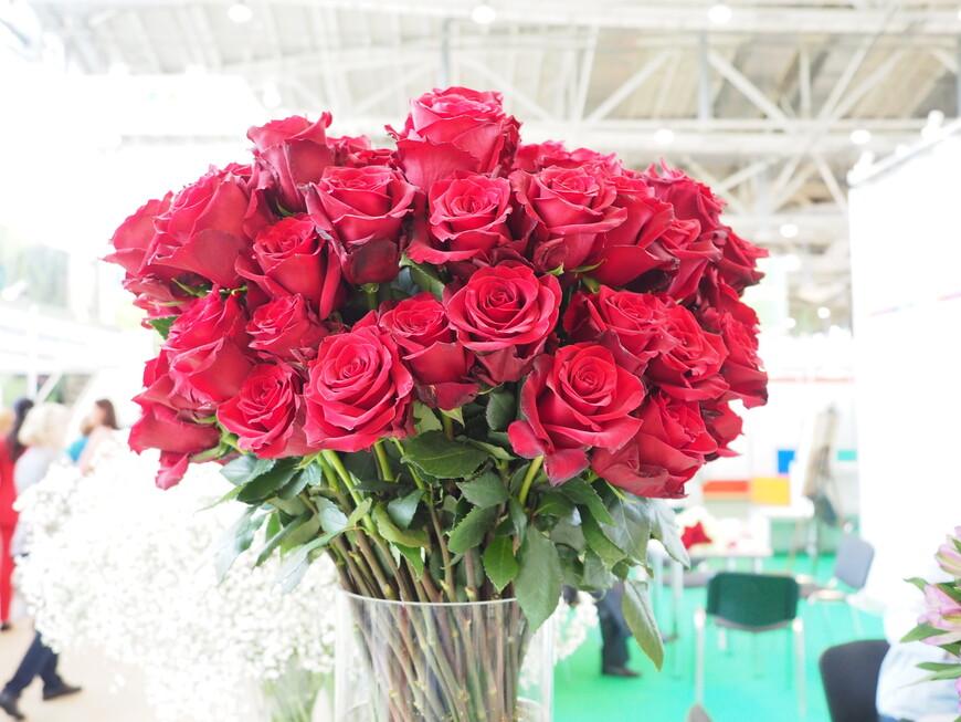 Вот они красавицы розы из Эквадора