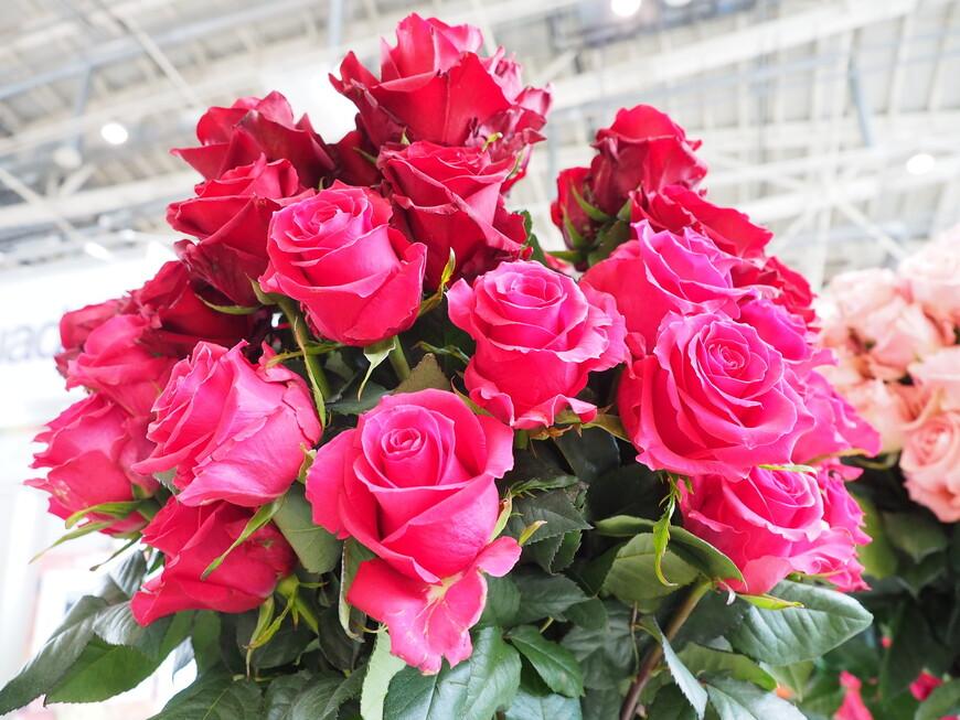 Нереальный цвет эквадорских роз