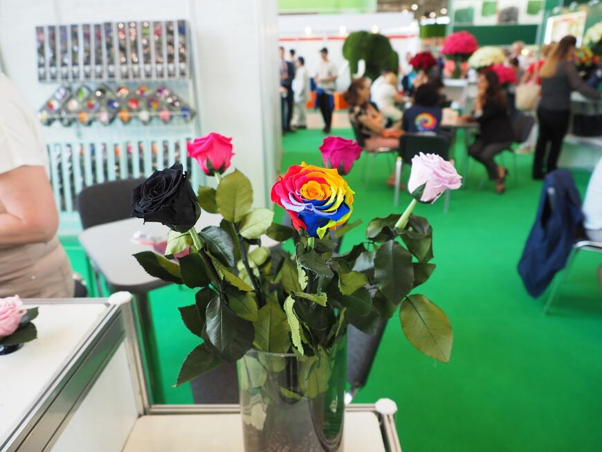 В Эквадоре произрастает более 400 сортов роз. Есть черные, белые, красные, разноцветные.