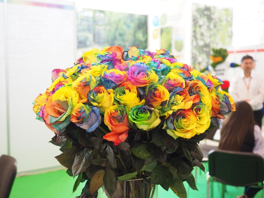 Хит нынешнего сезона — «радужные» многоцветные розы из Эквадора. Впервые увидели их на этой выставке и долго пытались понять, как их раскрашивают, но позже в интернете прочитали, что это выведенный особый сорт роз из Эквадора. Сегодня «радужными» розами торгует каждая вторая палатка на Рижском цветочном рынке в Москве и они пользуются большой популярностью у покупателей.