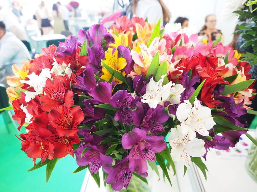 Название этих цветов из Эквадора не выяснили