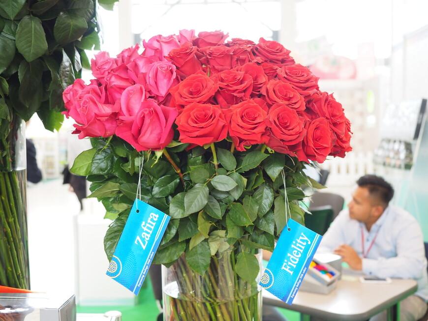 Здесь эквадорские товарищи благоразумно подписали сорт роз