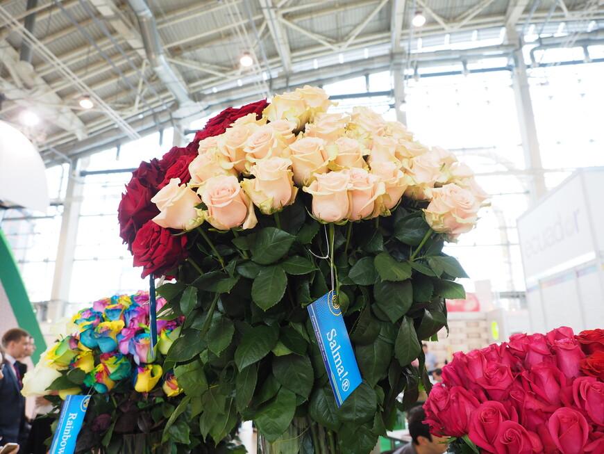 Сорт роз из Эквадора под названием Salma