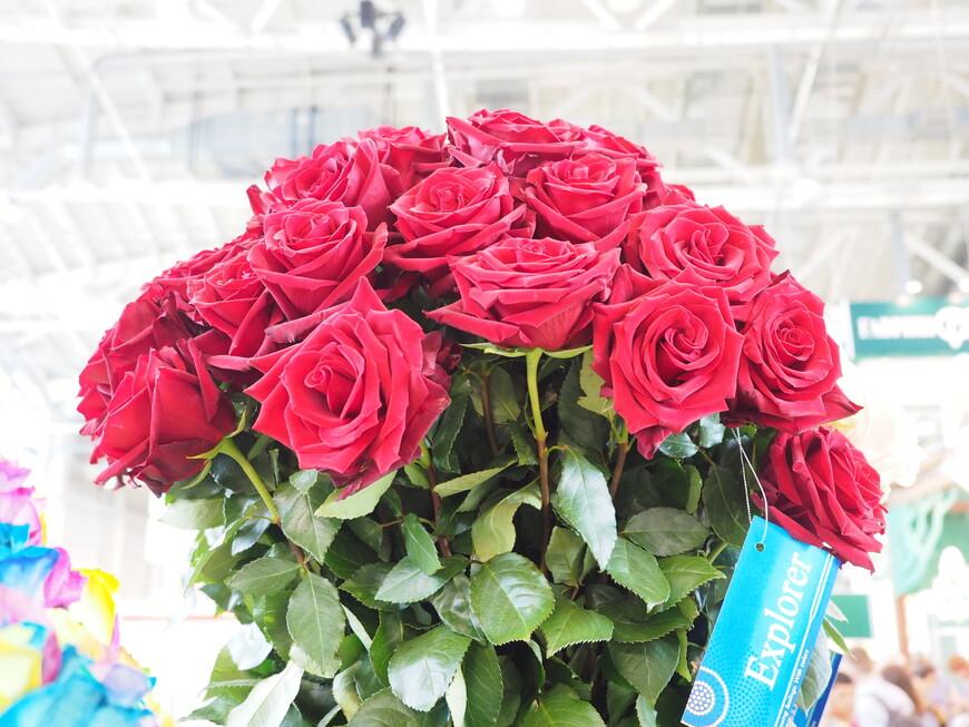 Сорт роз из Эквадора под названием Explorer - в переводе исследователь или путешественник