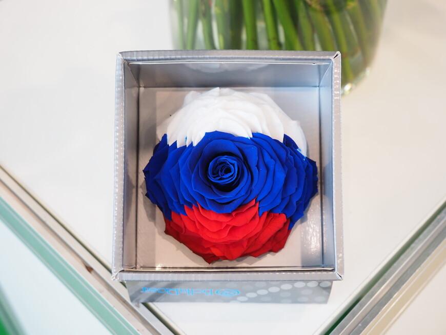 Роза в цветах российского флага - подарок эквадорских товарищей