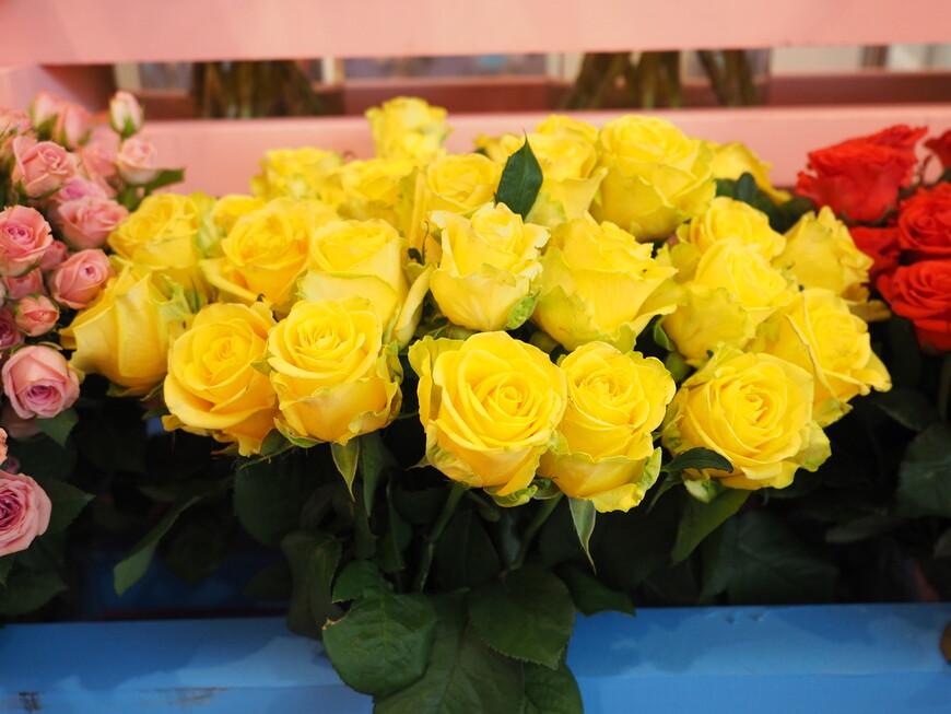 Розы, выращенные в России