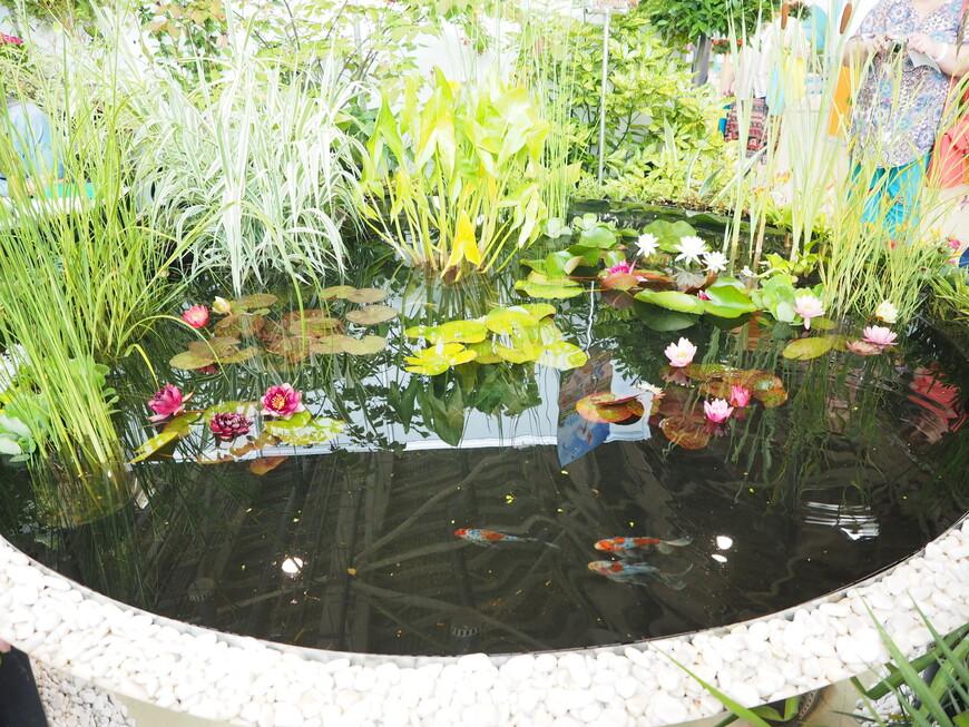 В экспозиции были целые водоемы с золотыми рыбками