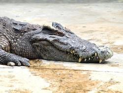 Крокодила поймали на пляже Пхукета