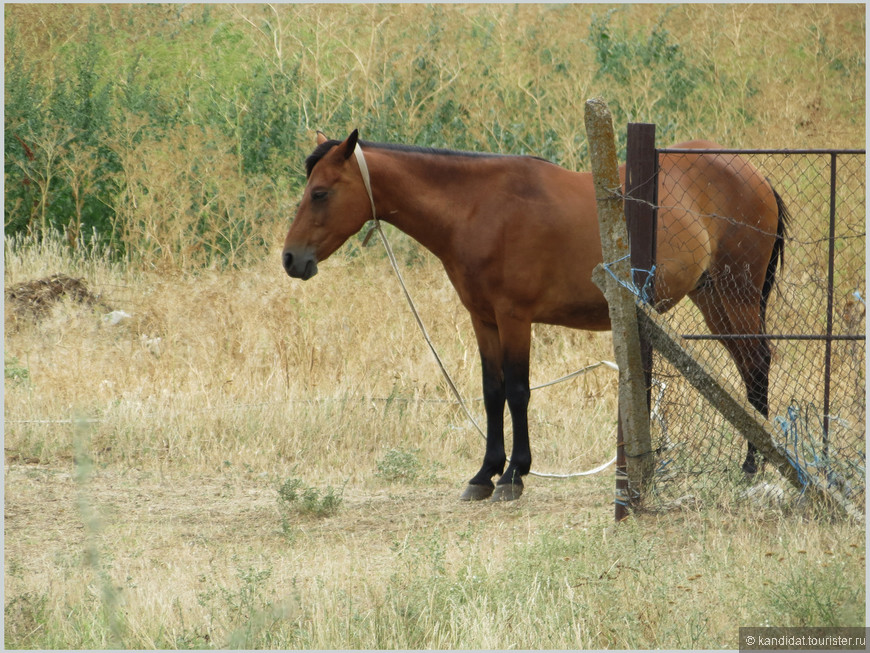 """Не везде еще  """"железный конь пришел на смену крестьянской (болгарской) лошадке..."""""""