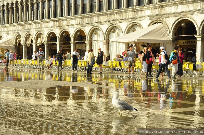Так поднимается уровень воды, покрывая всю площадь Святого Марка.