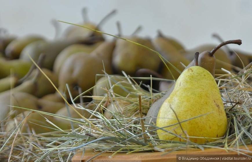Груши,  выставленные на празднике, посвященному сбору груш в поселке Ваттаро, что над озером Кальдонаццо.