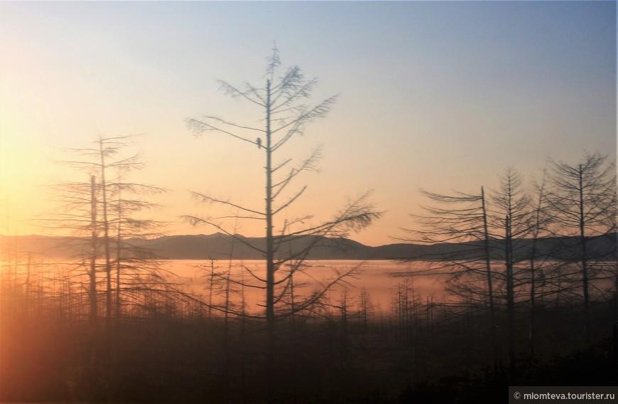 Утро при подъезде к Тымовскому (через запотевшее окно и в движении).  Туман лежит у самой земли.. Но ворона видна:-).