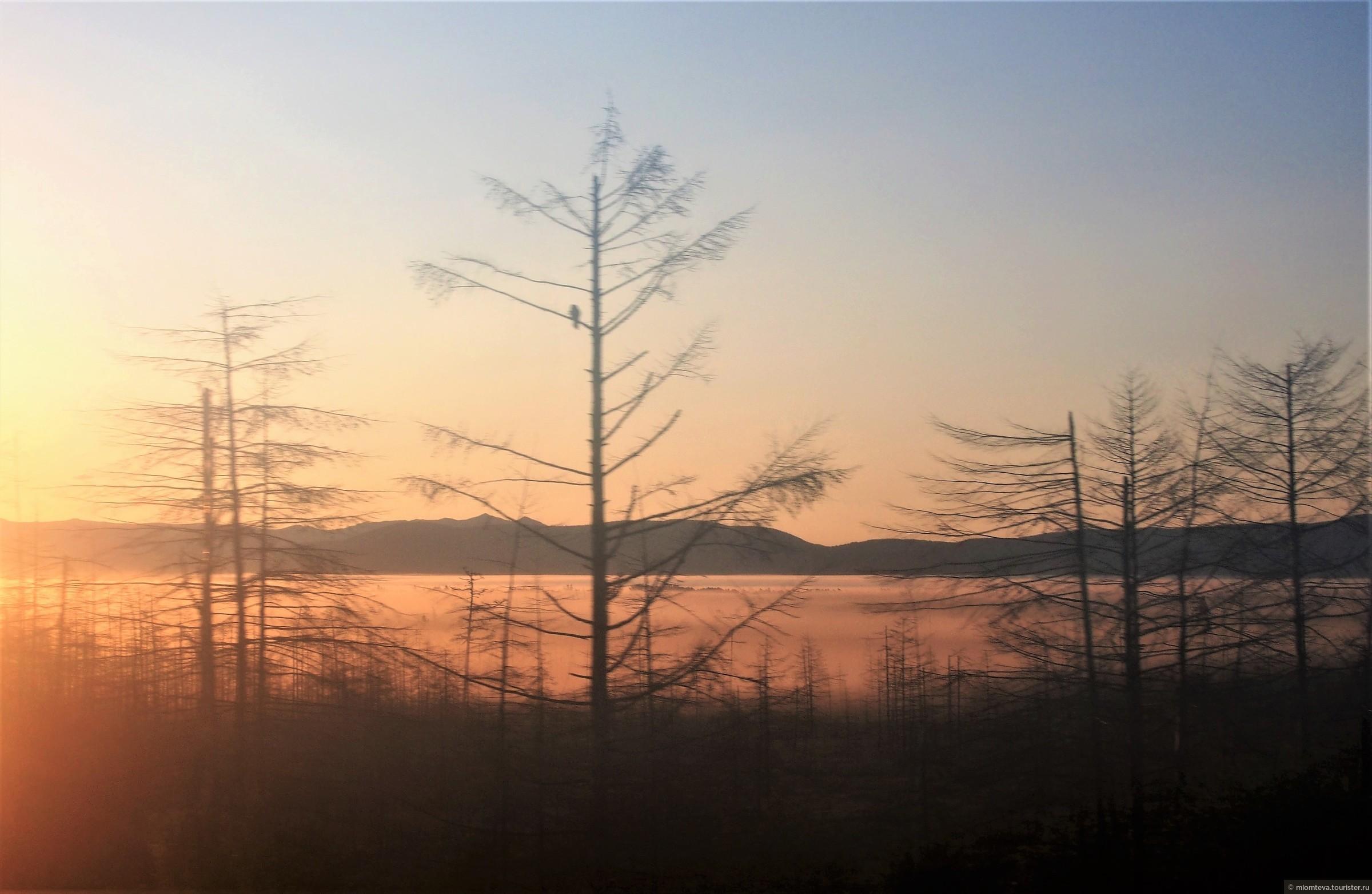 Утро при подъезде к Тымовскому (через запотевшее окно и в движении).  Туман лежит у самой земли.. Но ворона видна:-)., Александровск-Сахалинский