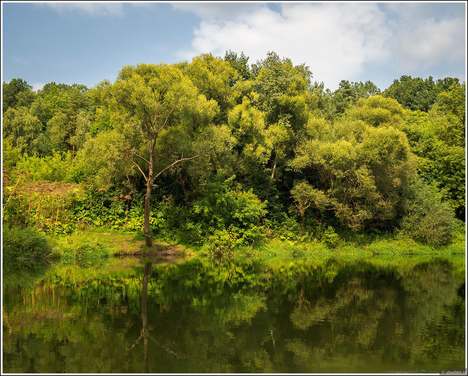 Калужская Амазония, Пятьдесят оттенков зеленого