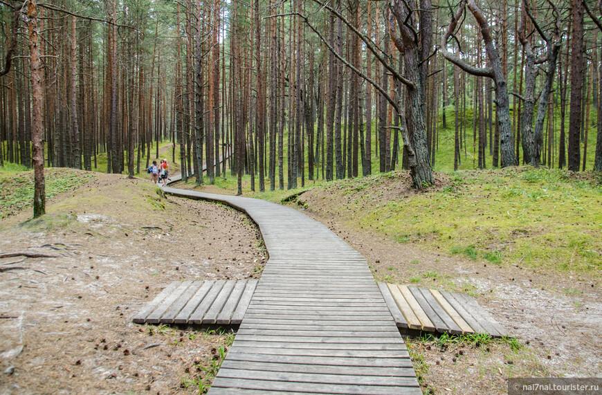 Юрмала-это прежде всего сосновый лес