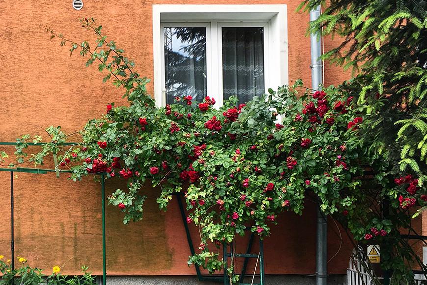 Европейские двери и окна — моя страсть. А это окно, к удивлению, в спальном районе