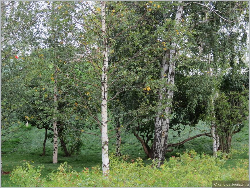 Понятно, что парком это место станет через несколько лет. Хорошо , чтобы как можно больше растений прижилось. Кстати, интересная арифметика... На сайте gazeta.ru приводятся такие цифры: площадь парка 10,2 га (понятно, что площадь под зелеными насаждениями ну ни как не больше половины). На этой территории якобы высадили: 760 деревьев, 7 тыс. кустов, 150 тыс. однолетних и 860 тыс. многолетних растений. Я в ботанике не силен, но калькулятором пользоваться умею . Посчитайте на досуге, с какой плотностью растения разместили в парке. Для сравнения, в московском ботаническом саду на площади  331,49 га 18000 наименований растений. Или, например, сколько времени занимает посадка одного растения?       А потом, через два дня работы парка СМИ сообщили, что посетители вытоптали и унесли 10000 растений (каким образом унесли???)