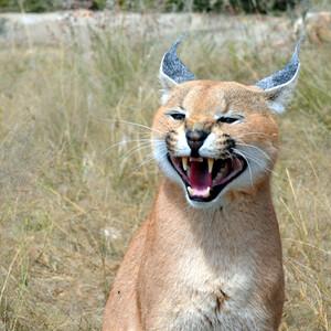 Намибия. Животный мир резервации Наанкузи