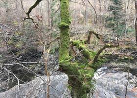 Немного о Хайленде (Высокогорная Шотландия)