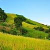 Рисовые плантации на высоте 1500 метров