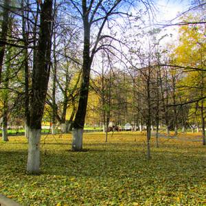 Ярославль. Осень – время любования