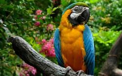 Лучший зоопарк в мире находится на Тенерифе