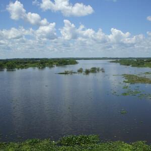 Амазонская палитра: от рассвета до заката...