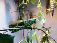 Аквариум и инсектарий
