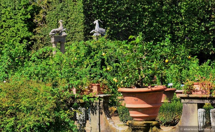 Декоративный островок с лимонными деревьями в горшках