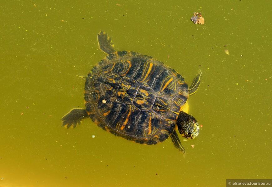 Черепашки водятся. Их много плавает в искусственном водоеме.