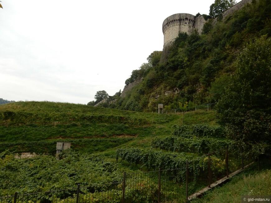 Самый большой в Европе виноградник в черте города.