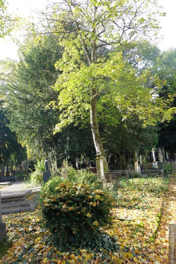 Старое Кладбище Бонна называется  - Alter Friedhof.
