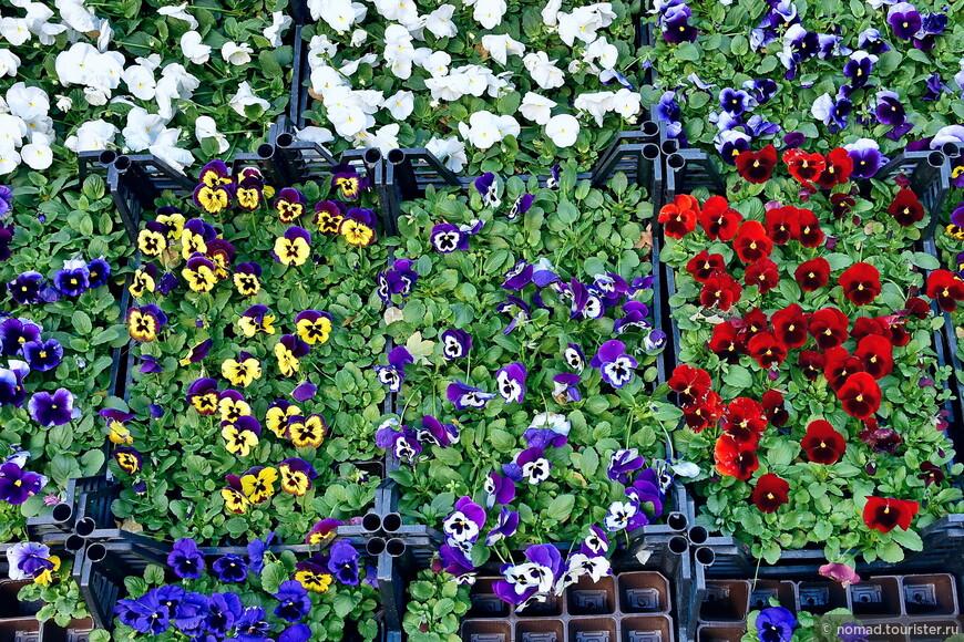 ... и удивиться радуге стамбульских цветов?
